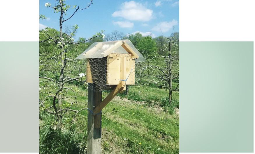 najam solitarnih pčela
