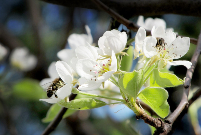 Interesting things about bees